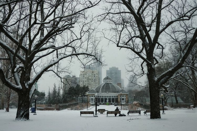 Winter in Allen Gardens Greenhouse Outdoors Frozen Nature Beauty In Nature Walking Around Snowing ❄ Park Bench City Park Toronto Canada Tree Snow Cold Temperature Winter Bare Tree Park - Man Made Space Sky The Great Outdoors - 2018 EyeEm Awards The Traveler - 2018 EyeEm Awards The Architect - 2018 EyeEm Awards The Street Photographer - 2018 EyeEm Awards 10 #urbanana: The Urban Playground Holiday Moments