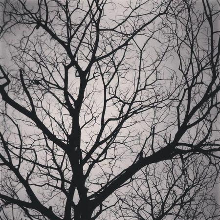 The abandoned tree Tree Branches Twigs Monsoons Noleaves Illusional Visual Deceptive Alternateview Cracks Veins Monsoons Dullskies Instacapture Instamumbai Instamahim Instadaily Ilovemycamera Iloveinstagram Instashare Instafavorite Instascene Instagraphy Instaidea instacreative toomanyhashtags :P
