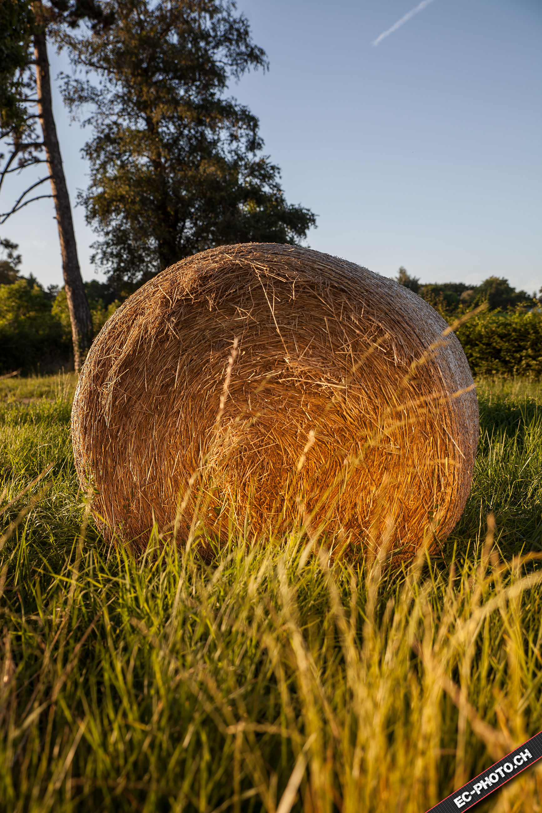 tree, rural scene, growth, hay, clear sky, close-up, grass, harvesting, nature, field, agriculture, bale, tranquil scene, tranquility, plant, farm, day, outdoors, blue, no people, sky, green color, cultivated land, surface level, haystack, farmland, beauty in nature, scenics