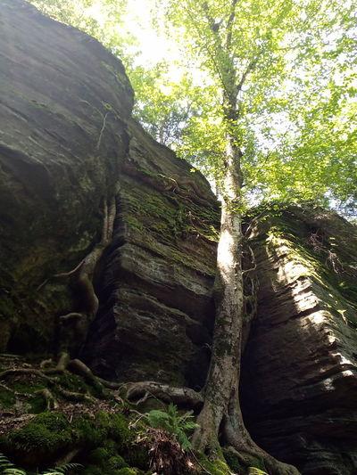 rocks n tree.