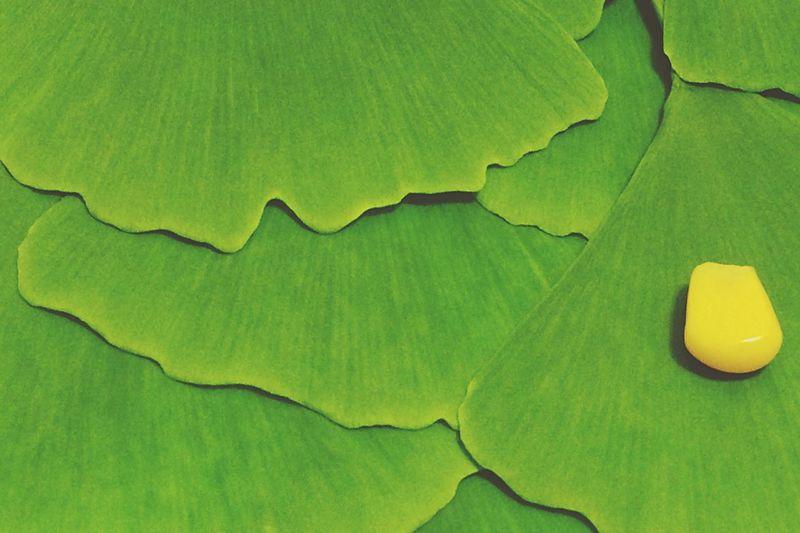 Full frame shot of ginkgo biloba leaves