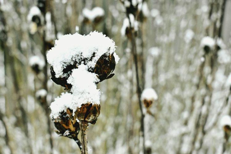 Dogsofinstagram Dogdays Snow Blizzard HASHTAG Ruffday Instagram Nature Close-up Snapshots Of Life Change Winter Frozen Nature #stilllife Pleasebuyineedthemoney 😂😂✌✌ Nikon