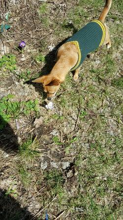 One Animal Dog Close-up Chihuahua Taking Photos Pets Corner Dogofeyeem My Pet Spring Photography Ilovemydog Doggy Mydogiscoolerthanyourkids Dog Photography Mydogisthebestintheworld Pet Photography  Pet Life  Wisconsin Peanut