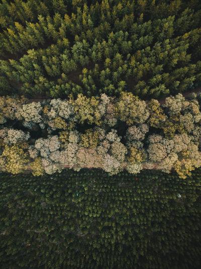 Full frame shot of moss growing on tree