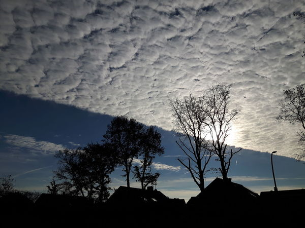 Nature Tree Sky Cloud - Sky Crazy Sky Clouds And Sky Cloud Line Blue Black Outdoors No People Beauty In Nature Day Autumn Herbst