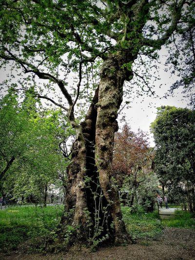 Padova, Aprile 2019 Hdr_Collection City Botanical Garden Trees Sky
