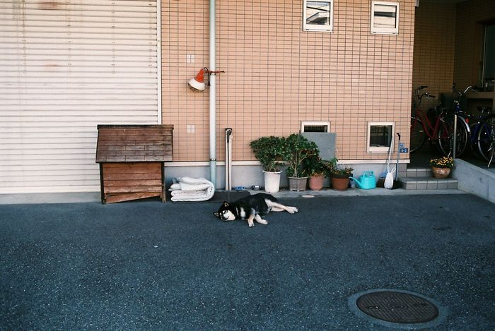 Photo Photography Photooftheday Film Film Photography Filmisnotdead 35mm Film Streetphotography Street Photography Dog Nap Time Nap View EyeEm Best Shots EyeEmBestPics EyeEm Best Edits Japan