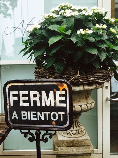 Close-up Closed Day Focus On Foreground Green Green Color Growth Information Information Sign Leaf Nature No People Outdoors Plant Text à Bientôt