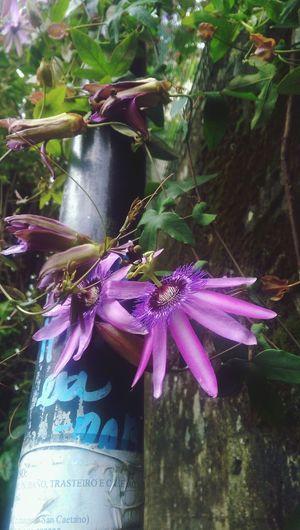 #flowerpower #lila