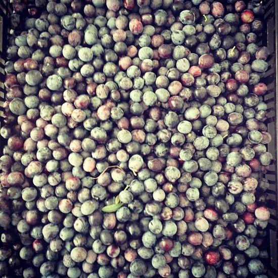Buone da ... Mangiare #olive #nere #apulia #agricoltura #instapuglia #igersapulia #instabisceglie #igersbisceglie #food Food Olive Apúlia Igersbisceglie Instapuglia Igersapulia Instabisceglie Agricoltura Nere