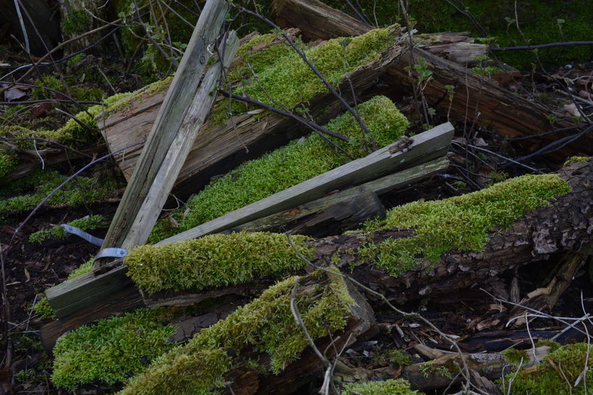 Damaged Fallen Tree Forest Green Green Color Holz Lost Places Lostplaces Messy Moss Mossy Nature Outdoors Overgrown Plant Rotting Rotting Wood Tree Trunk Wood WoodLand Collapsed Collapsed Fences Collapsed Building