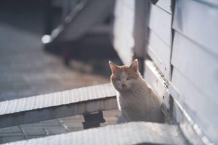 Cat Feralcat 길고양이 흰노입니다
