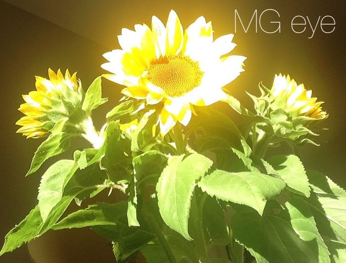 Another flower & sun Enjoying The Sun The Calmness Within Melbourne Beautiful Surroundings Relaxing Colors