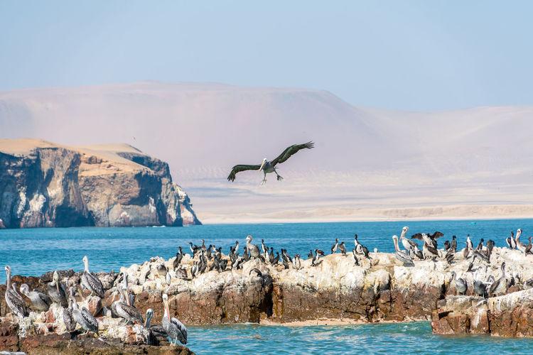Birds on rock formations in sea