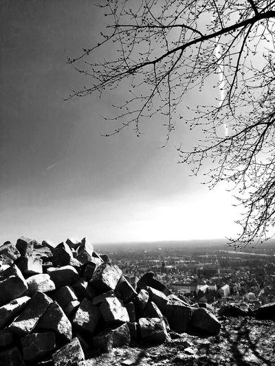 Black & White Street Photography Sunlight Blackandwhite Unforgettable ♥ Unforgettable Moment Unforgettable Ruine Ruins Black And White Bird Flying Flock Of Birds Bird Of Prey Sky Animal Themes
