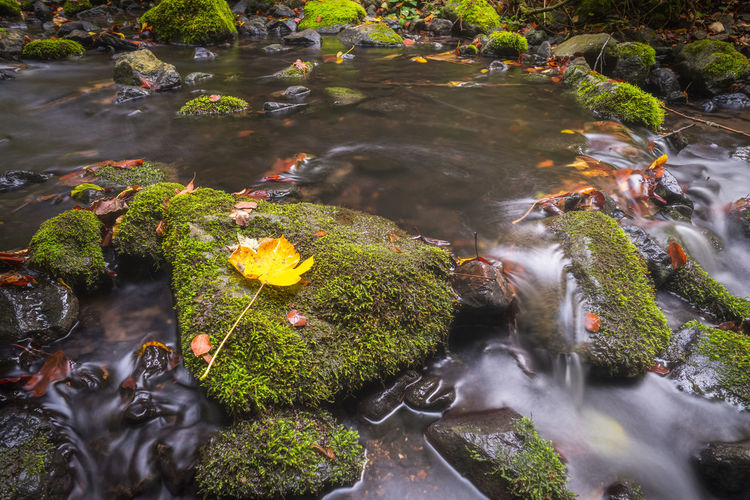 Autumn Beauty In Nature Blurred Motion Day Flowing Water Growth High Angle View Long Exposure Motion Nature No People Outdoors Plant Rock Rock - Object Scenics - Nature Solid Water