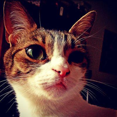 Cat Gato Gat Hobbes