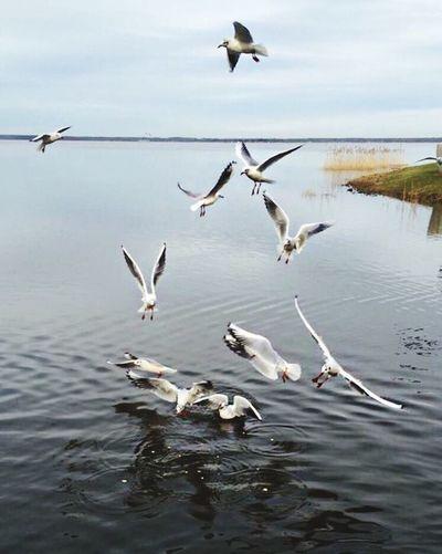 Möwe Steinhude-am-meer.de - Dein Meer-Foto Steinhuder Meer Nature Tiere Relaxing