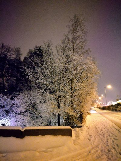 'A Winters Night' Oslo 2019 Tree Illuminated Sky Snow Covered White Snow Winter Icicle Frozen Deep Snow Cold Temperature Covering Weather Condition Snowcapped Cold Snowfall Calm Tranquil Scene