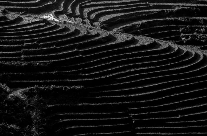 Lines and curves of beautiful landscapes of Sapa, Vietnam, 2015 Beauty In Nature Black Black & White Black And White Photography Black&white Blackandwhite Complexity Curves Design Field Hils Landscape Landscape_Collection Landscape_photography Landscapes Lines And Shapes Nature Outdoors Pattern Repetition Sapa Vietnam Scenics Tranquility Vietnam Wave Pattern
