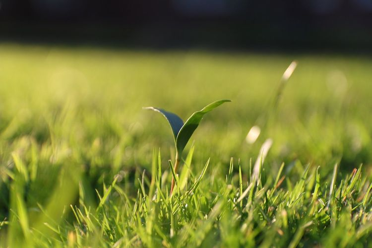 EyeEm Selects Growth Grass Nature Plant Green Color Beauty In Nature Field Day Outdoors No People Fragility Close-up Freshness Flower