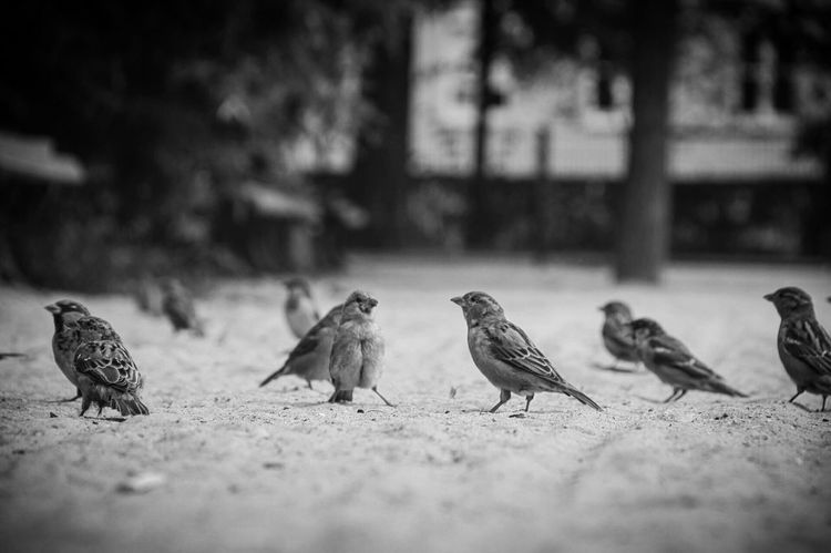 Talk. Animals In The Wild Animal Themes Bird Wildlife Selective Focus Vertebrate Togetherness Flock Of Birds Zoology Flying Focus On Foreground Nature Non-urban Scene Animal Tranquility No People Avian Flapping Spatzen Sperling Vögel Füttern Fütterung  Feeding  Feeding The Birds Feeding Animals