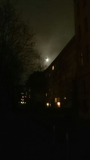 Walking The Dog in the Night. FoolMoon Taking Photos Moment