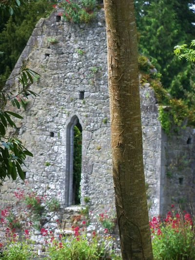 Friary ruins at Adare, Ireland Architecture Beauty In Nature Built Structure Day Flower Focus On Foreground Green Color Growing Growth Nature No People Outdoors Pink Color Plant Ruins, Friary, Priory, Monastery, Fortress, Medieval, Francsican, Flowers, Stone, Sky, History, The Past, Adare, Ireland Tranquility Tree Tree Trunk Tree Trunk, Pink Flowers. Window, Stone ,wall The Traveler - 2018 EyeEm Awards