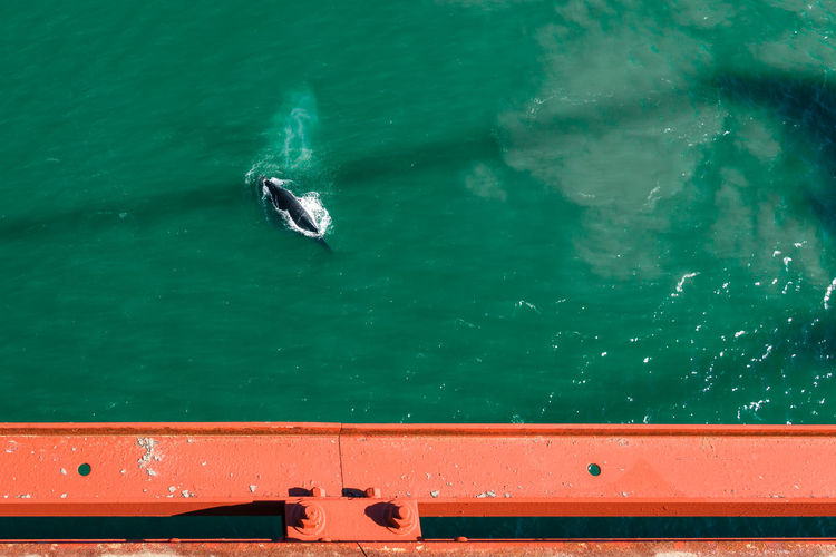 High angle view of whale on sea