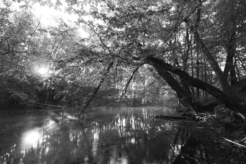 Black And White Forest Landscape Masuren Masuria Mazury Morning Light Nature River Summer Trees Wide Angle