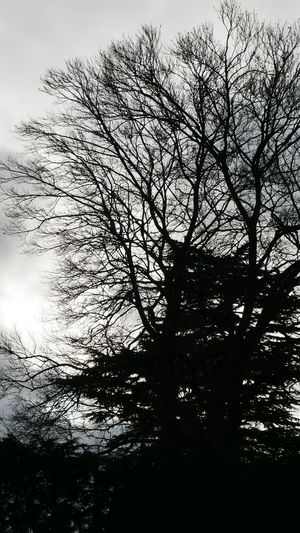 spooky tree Photowalktheworld Spooky Tree Bird Silhouette Branch Sky Single Tree Idyllic Remote Tranquility Tranquil Scene