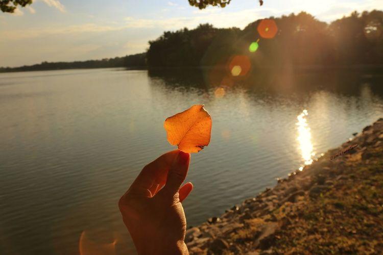Fall Eye4photography  Sunset_collection EyeEm Nature Lover EyeEm New Jersey