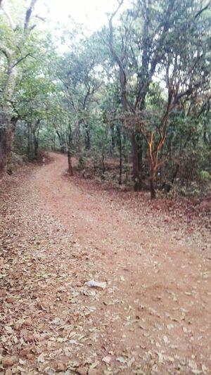 Aloneroad Loneliness A Road Not Taken Beautiful Nature Treescape