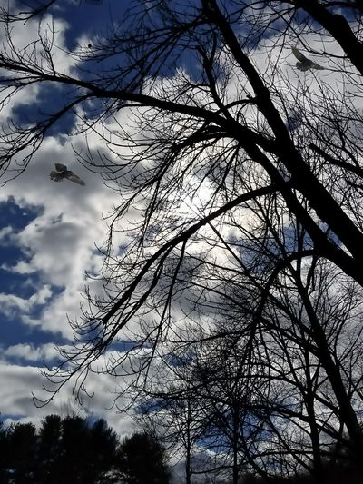Fly Away Tree_collection  Connecticut Branches Birdinflight Beautiful Sky And Clouds Winter Nature_perfection Trees And Nature Peaceful Tree Branches Sky Clouds And Sky Low Angle View Branch Sky Outdoors Day