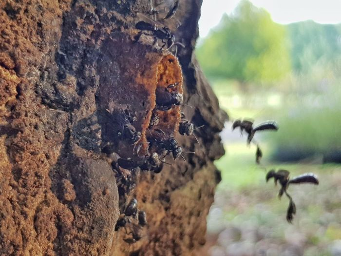 busy bee... stingless bees Hive Bees Stingless Bees Kelulut Honey Farm Botanical Garden Taman Botani Putrajaya EyeEm Selects Tree Insect Close-up