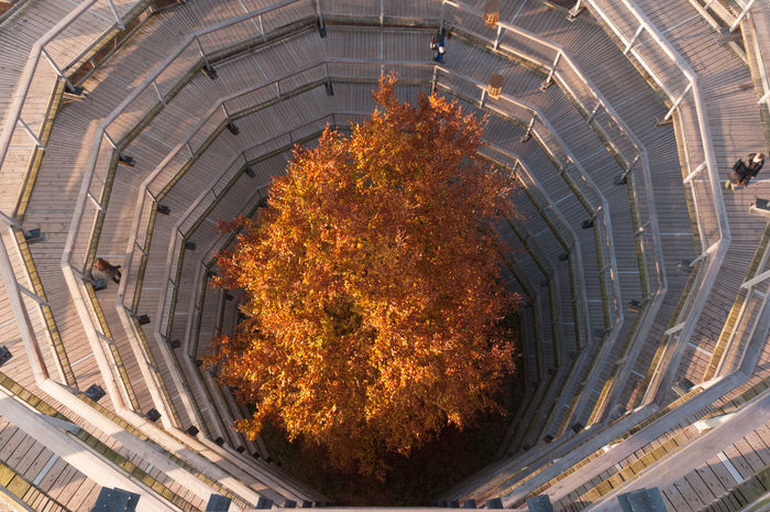 Architecture Arround Autumn Baumwipfelpfad Building Exterior Built Structure In The Deep Outdoors Tree Way Down Way Up
