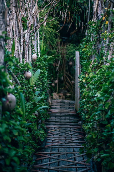 Vintage old wooden bridge leading towards the forest. Bridge decorated with green plants and dried coconuts. Area Beautiful Construction Footpath Grass Green Natural Nature Path Backgrounds Bridge Broken Color Concert Countryside Design Environment Landscape Nobody Outdoors Park Pathway Plank Trail Walkway