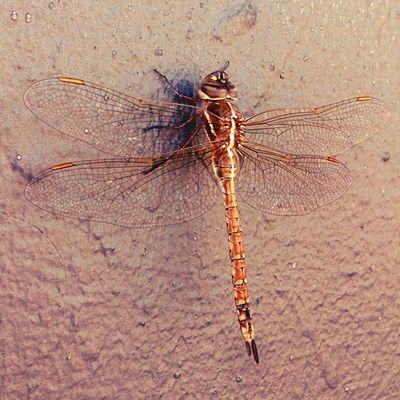 aguacil Insect Rain Therainiscoming Summer