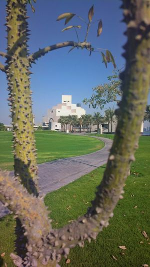 Built Structure Architecture Tree Building Exterior Growth Grass Day Nature Green Color History Clear Sky Field Park - Man Made Space No People Outdoors Sky Beauty In Nature City Framing