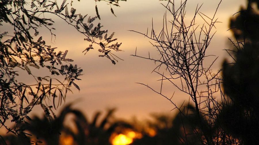 Some of the limited Shrubbery found in the Desert Landscape at Dusk .