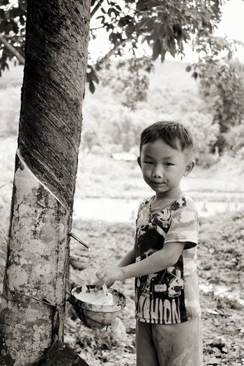 Portrait of boy collecting latex falling from tree trunk