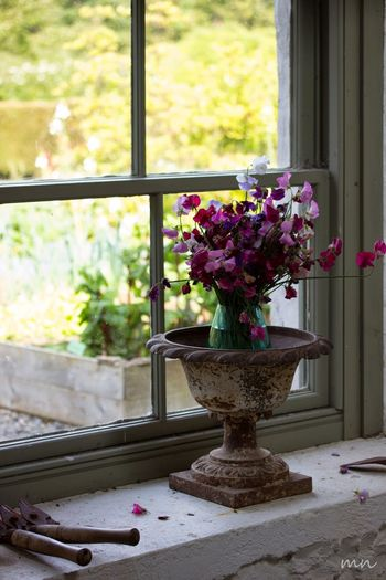 Beauty In Nature Blooming Bunch Of Flowers Close-up Day Decoration Flower Flower Arrangement Flower Pot Freshness Garden Gardening Growth In Bloom Nature No People Petal Pink Color Plant Potted Plant Purple Scotland Vase Window Sill