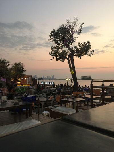 Cafe De Beach Niceview Beach View Restaurant Chilling Pattaya Beach Having A Good Time Harmony SmileAndBeHappy Sea And Sky Smooth AlwaysSmile Perfect Day Feeling Free Tree And Sky Tree Aleeninharmony