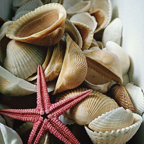 Close-Up Of Various Seashells And Starfish