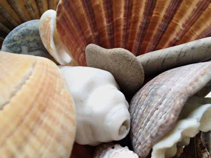 Makro Beachathome Close-up Nature Nature_collection Shell No People Fromfaraway Memories