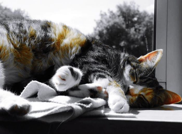 Cat Cat Lovers Sleeping Cat Lover Black White And Color Black White Orange Black White And Orange