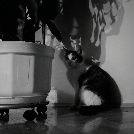 Cat Cat Content