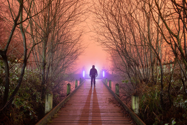Tree Full Length Men Forest Silhouette Adventure Rear View Standing Treelined vanishing point Pathway Diminishing Perspective Passageway Walkway Boardwalk Bare Tree Footbridge Empty Road Foggy Countryside The Way Forward