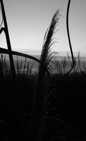 Nikonphotography Uruguaynatural Nikon Early Morning Sillouette Blackandwhite Morningdew Sunrise Solymár