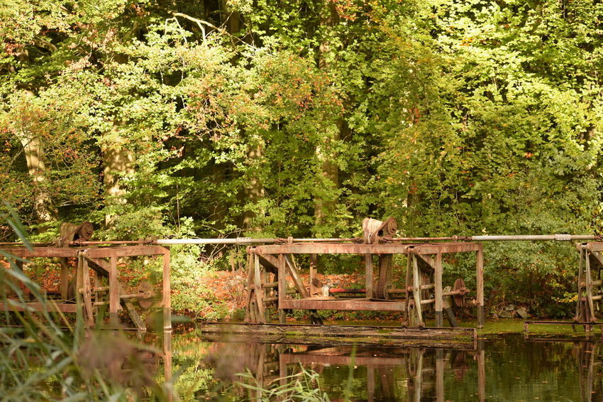 old metal in wood Plant Tree Reflection Nature Lake Water Day Tranquility No People Green Color Forest Beauty In Nature Growth Wood - Material Outdoors Non-urban Scene Land Tranquil Scene Waterfront
